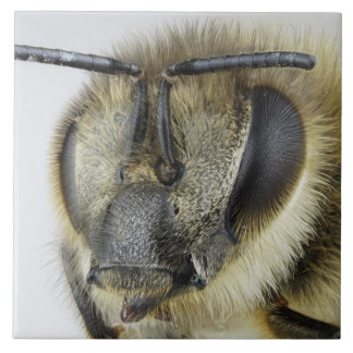 Head of honeybee tile