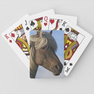 Head of Icelandic horse, Iceland Card Decks