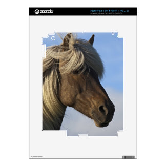 Head of Icelandic horse, Iceland Decals For iPad 3