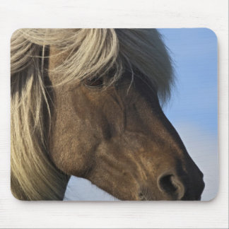 Head of Icelandic horse, Iceland Mouse Pad