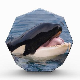Head of killer whale acrylic award