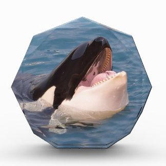 Head of killer whale award
