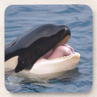 Head of killer whale beverage coaster