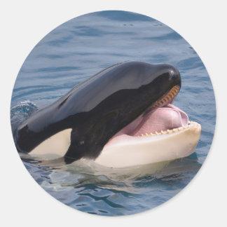 Head of killer whale classic round sticker