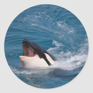 Head of killer whale classic round sticker