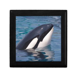 Head of killer whale gift box