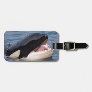 Head of killer whale luggage tag