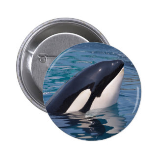 Head of killer whale pinback button