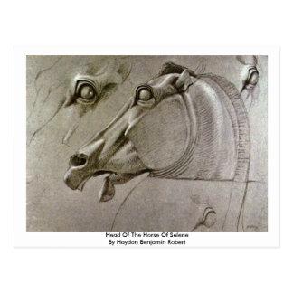 Head Of The Horse Of Selene Postcard