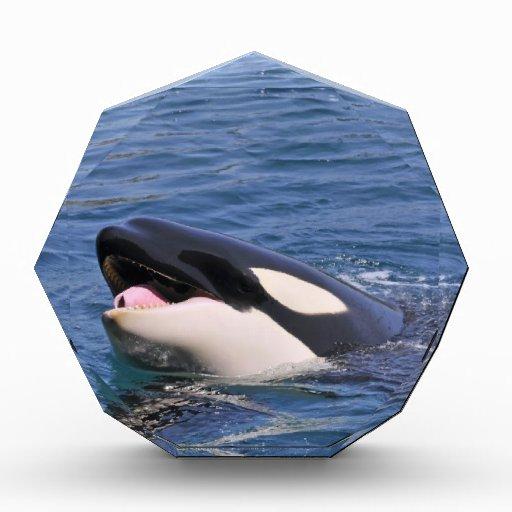 Head of whale killer awards