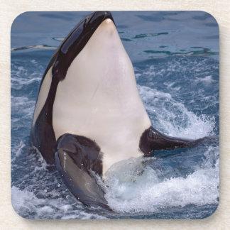 Head of whale killer coaster