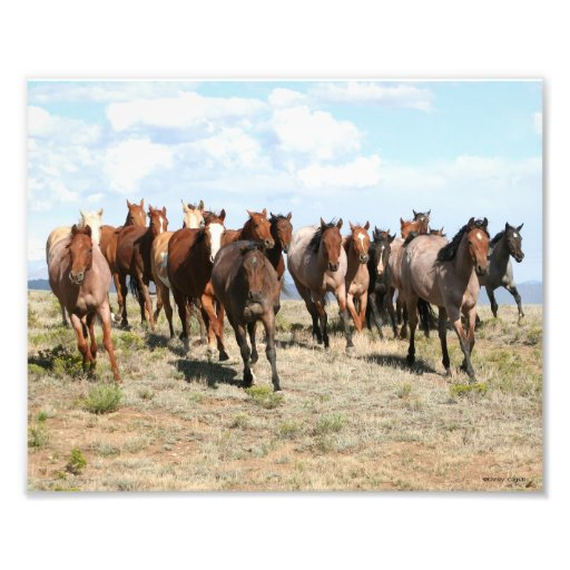Head-On Herd of Horses 8x10 Photo Print