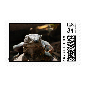 Head On Iguana Postage