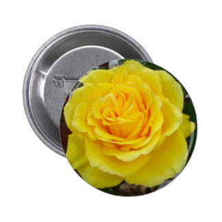 Head On View Of A Yellow Rose With Garden Backgrou Pinback Button