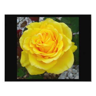 Head On View Of A Yellow Rose With Garden Backgrou Card