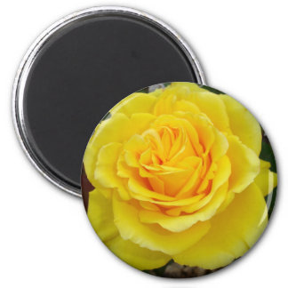 Head On View Of A Yellow Rose With Garden Backgrou Fridge Magnets