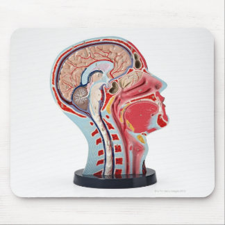 Head Section Model Mouse Pad