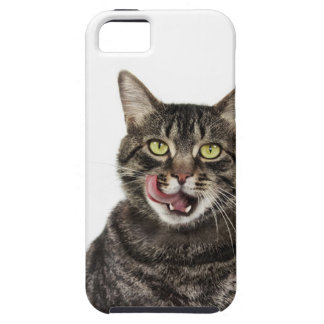 Head shot of a male domestic tabby cat licking iPhone SE/5/5s case