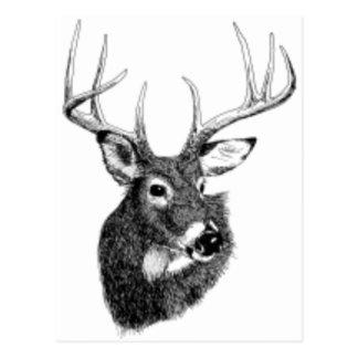 headgif de los ciervos tarjetas postales