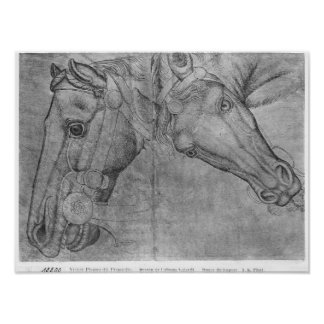 Heads of horses, from the The Vallardi Album Poster