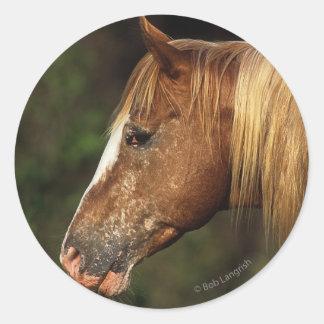 Headshot 1 del caballo del Appaloosa Pegatina Redonda