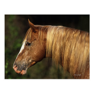 Headshot 1 del caballo del Appaloosa Postal