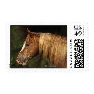 Headshot 1 del caballo del Appaloosa Envio