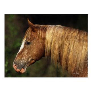 Headshot 1 del caballo del Appaloosa Tarjeta Postal