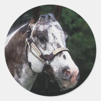 Headshot 2 del caballo del Appaloosa Pegatina Redonda