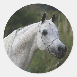 Headshot árabe 1 del caballo etiqueta redonda