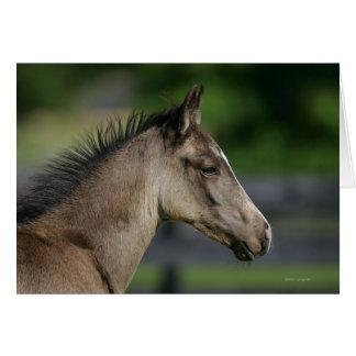 Headshot cuarto del potro del caballo tarjetón