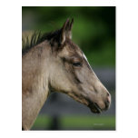 Headshot cuarto del potro del caballo tarjeta postal