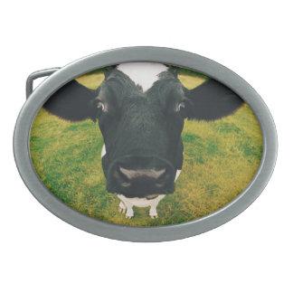 Headshot de la vaca frisia hebilla de cinturón oval