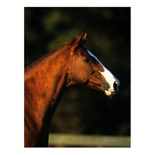 Headshot excelente del caballo tarjetas postales
