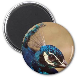 Headshot indio del pavo real imán redondo 5 cm
