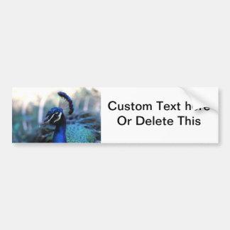 Headshot masculino del pavo real dado vuelta a la  etiqueta de parachoque