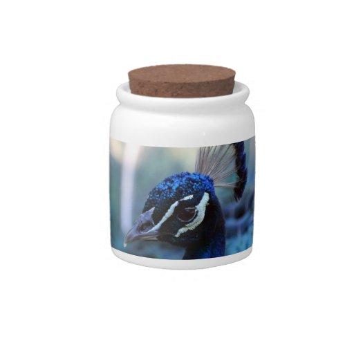 Headshot masculino del pavo real dado vuelta a la  jarra para caramelo