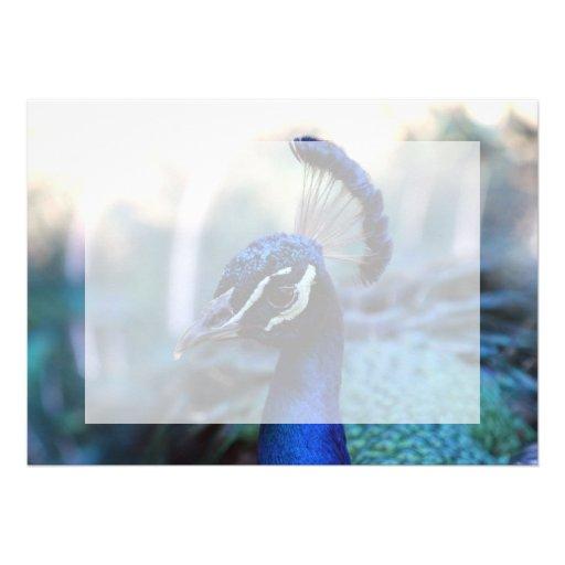 Headshot masculino del pavo real dado vuelta a la  invitaciones personalizada