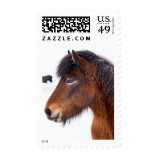 Headshot of Brown Icelandic Horse Postage