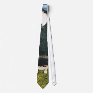 Headshot of Friesian Cow Tie