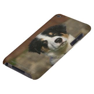 Headshot viejo del perrito del border collie de 12 iPod touch Case-Mate funda