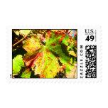 Healdsburg grape leaf stamp