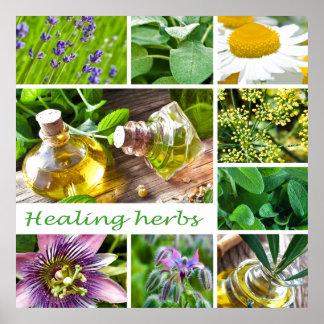 Healing herb,herbs,herbal medicine,chamomile,heal, poster