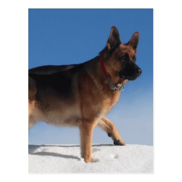 Beach Themed Healthy And Happy German Shepherd Dog Postcard