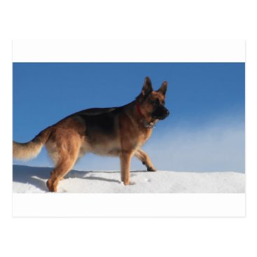 Beach Themed Healthy And Happy German Shepherd Dog Postcard