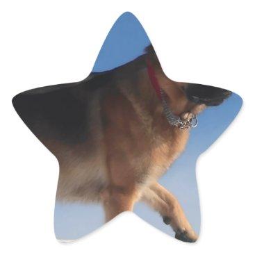 Beach Themed Healthy And Happy German Shepherd Dog Star Sticker