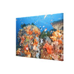 Healthy reef structure, Komodo National Park Canvas Print