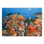 Healthy reef structure, Komodo National Park Cards