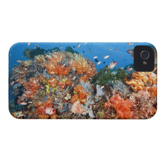 Healthy reef structure, Komodo National Park Case-Mate iPhone 4 Case