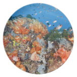 Healthy reef structure, Komodo National Park Dinner Plate